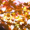 いろイロな秋。