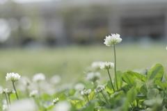 春、独り占め。