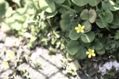 ここにも春。