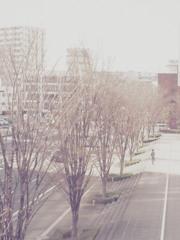 冬を待つ街。