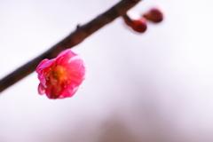 東北でも咲きました(^_^)v