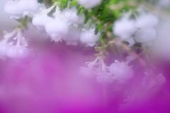 スズランエリカという花で~す。(^_-)-☆
