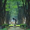 雨の定禅寺通り