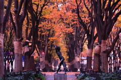 晩秋の定禅寺通り