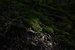 森の中の光