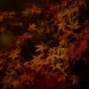 秋が待ち遠しくて その2