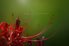 rouge d' automne