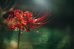 scarlet scarlet