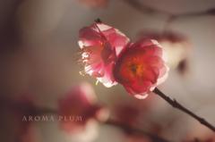 aroma plum