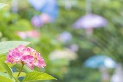 傘の森の紫陽花