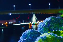 紫陽花と八戸大橋