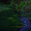 蛍 間見川の流れ