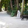 備瀬のフクギ並木3