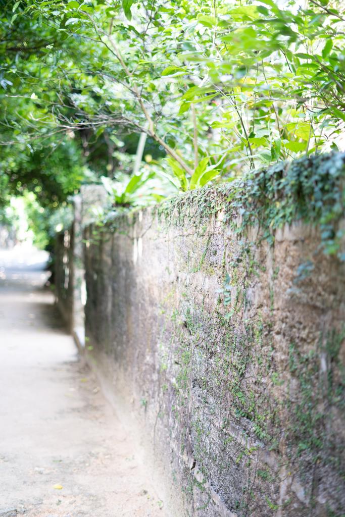 備瀬のフクギ並木2