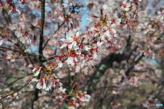 春の解像力-桃の舞