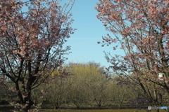 春の解像力