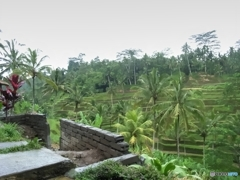 緑のジャングルの棚田3