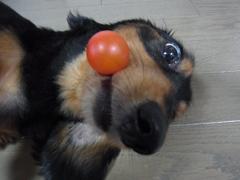 ちょっトマト!