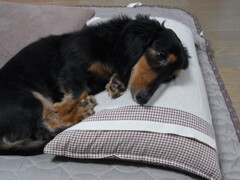 僕は枕が好き・・・