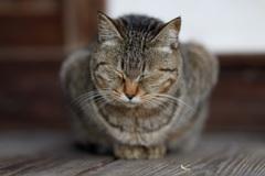 ポカポカ陽気に居眠り猫