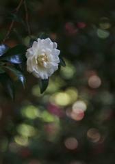 白い花のトキメキ ♪