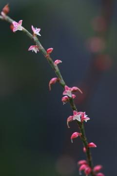 小さな祝い花