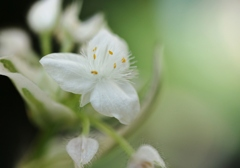 可憐な白い花