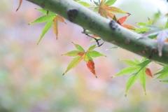 ほんのり秋色に  。。。
