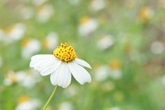 野に咲く花 ♪