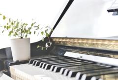 もしもピアノが弾けたなら 。。。 ♬