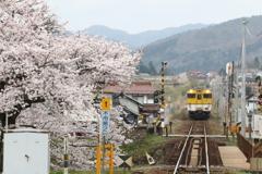 桜と汽車と。