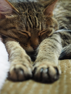 ヘッドスライディング寝