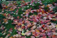 秋の落とし物その2