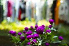 花と洗濯物2
