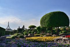 大き目の盆栽