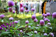 花と洗濯物1