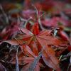 秋をクローズアップ