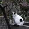 ジョーカー猫
