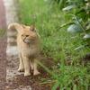 19年5月 散歩中のネコちゃん