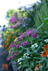 咲き匂ふ壇