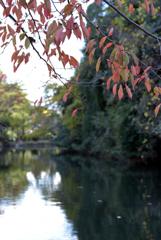 姫路城の堀と紅葉 3