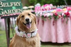 Happy Dog Mei