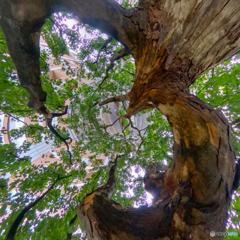 街路樹 - リトルプラネット