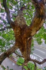 街路樹 - 縦方向パノラマ