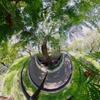 メタセコイアの木陰(正距円筒図法パノラマと同一ファイル)