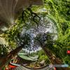樹齢350年(雨上がり)- リトルプラネット