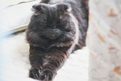 休日の猫たち~べベ~