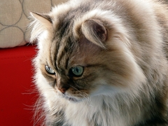 休日の猫たち・・・トモ・・・