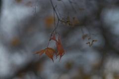 枯れ葉散る・・・