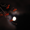 Red Stars illuminated by the MOON